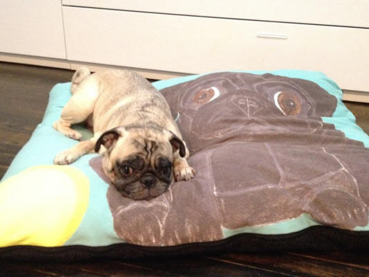 Mochi loves the bed so much she refuses to share! Photo courtesy of Yumee H., NY
