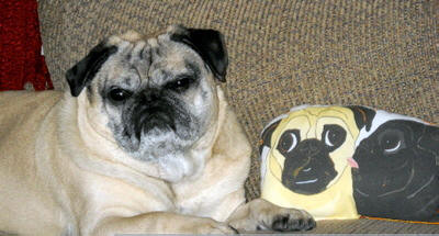 Bogart loves his art doll! Photo courtesy of Sara P., CO
