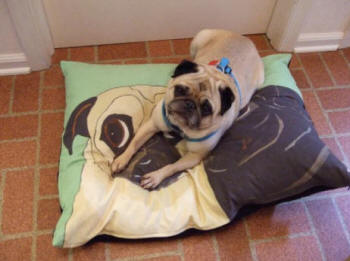 Shown: 24 x 30 - Pug Design A69
