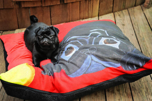 Bitty loves her new dog bed! photo courtesy of Christine D., OH