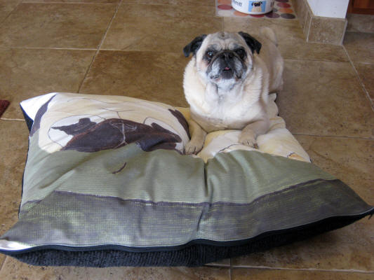 Shown: 24 x 30 - Pug Design A14