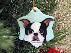 Snowflake - Boston Terrier - Photo courtesy of Michele S., CA