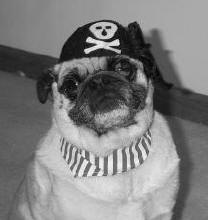 Halloween 2003 - Pirate Pug